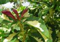 10 Cayman Botanic