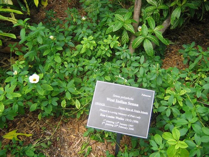 13 Cayman Botanic