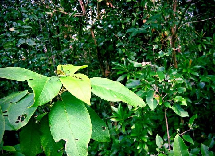 14 Cayman Botanic
