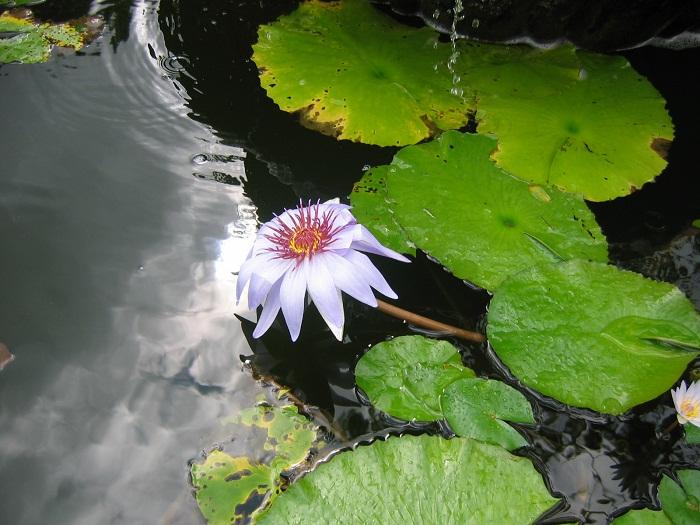 15 Cayman Botanic
