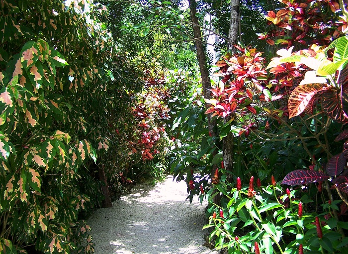 2 Cayman Botanic