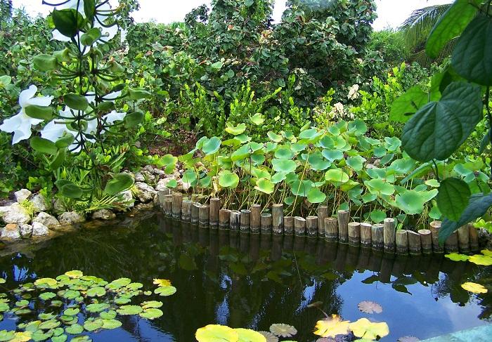 3 Cayman Botanic