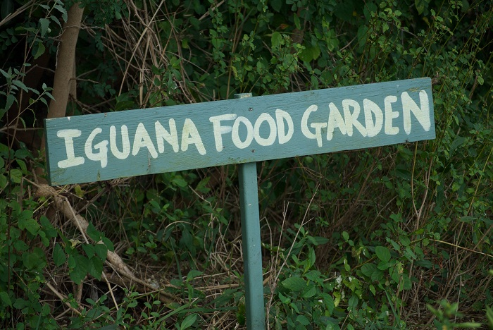 4 Cayman Botanic
