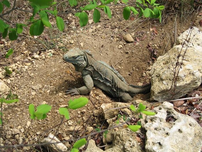 9 Cayman Botanic