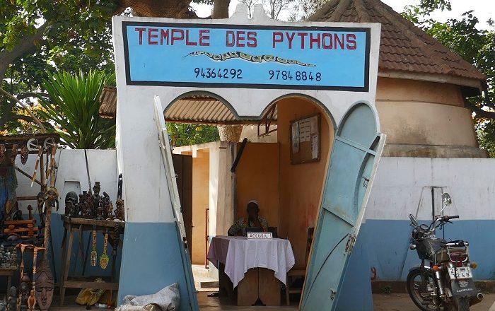 1 Pythons Benin