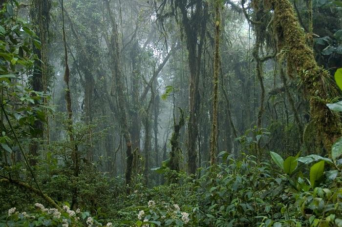1 Monteverde