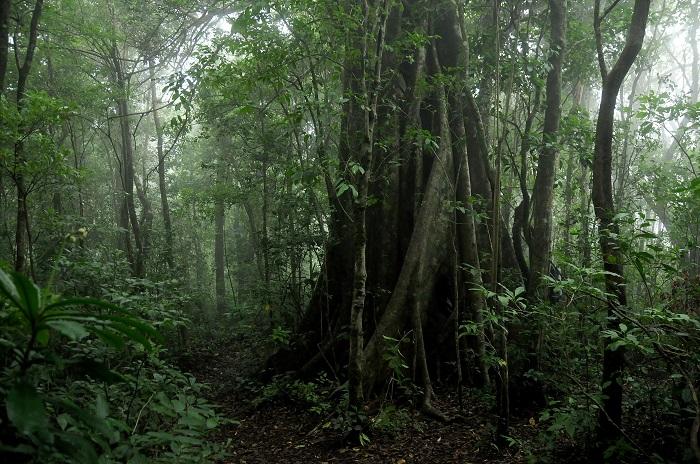 11 Monteverde