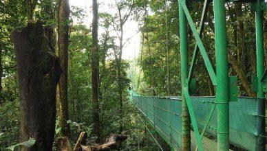 12 Monteverde