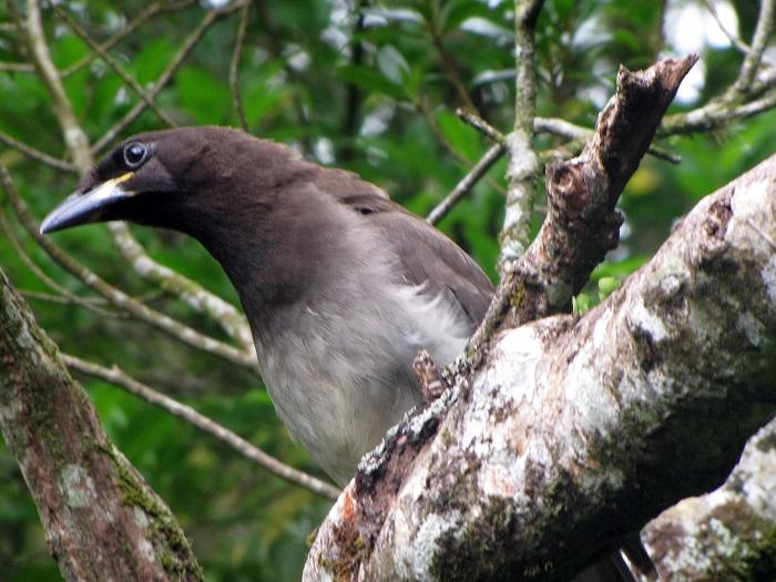 13 Monteverde