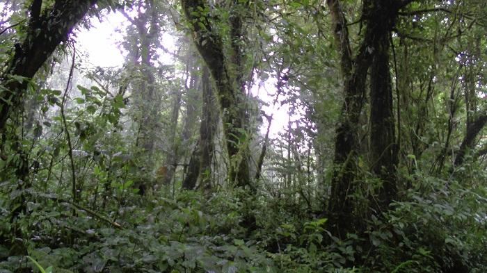 14 Monteverde
