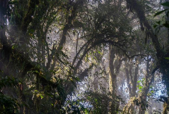 2 Monteverde