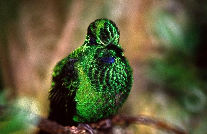 5 Monteverde