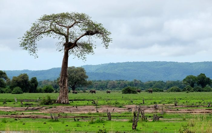 5 South Luangwa