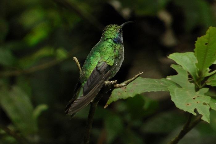 6 Monteverde