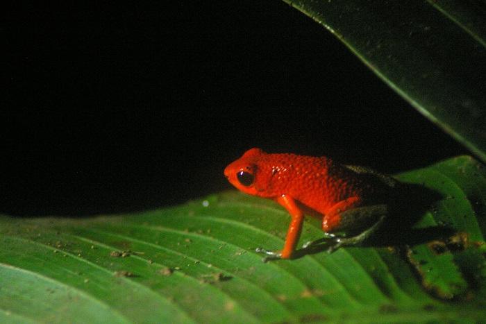 7 Monteverde