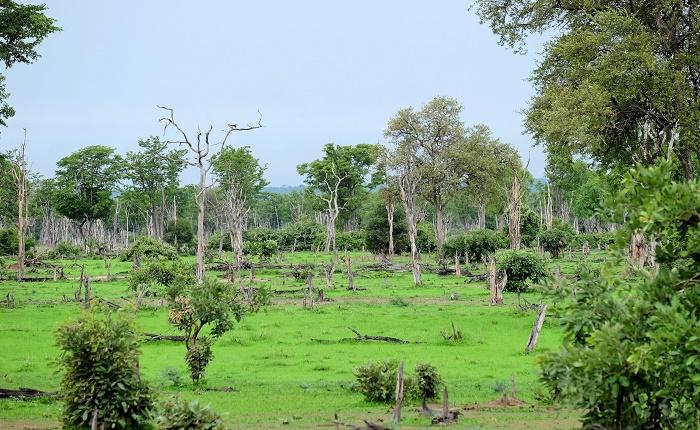7 South Luangwa
