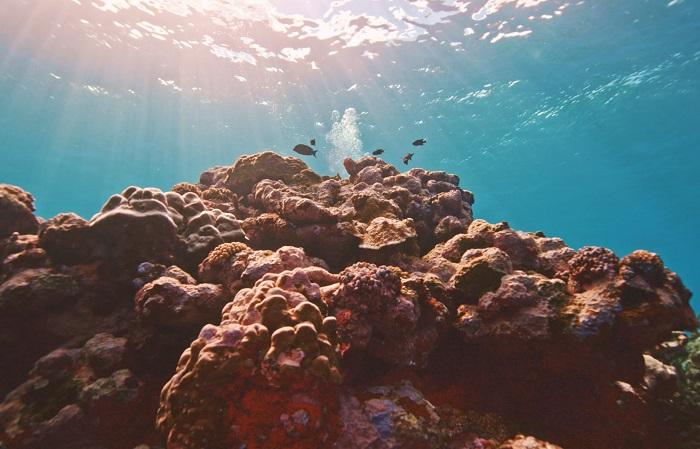 8 Fagatele Samoa