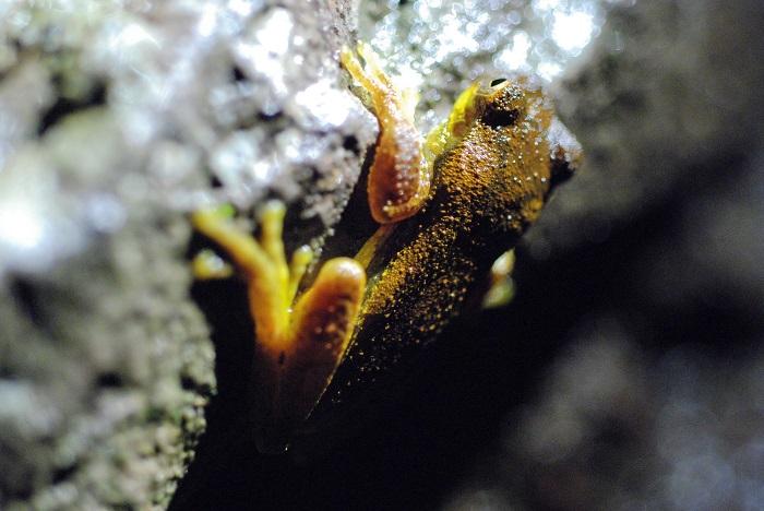 8 Monteverde