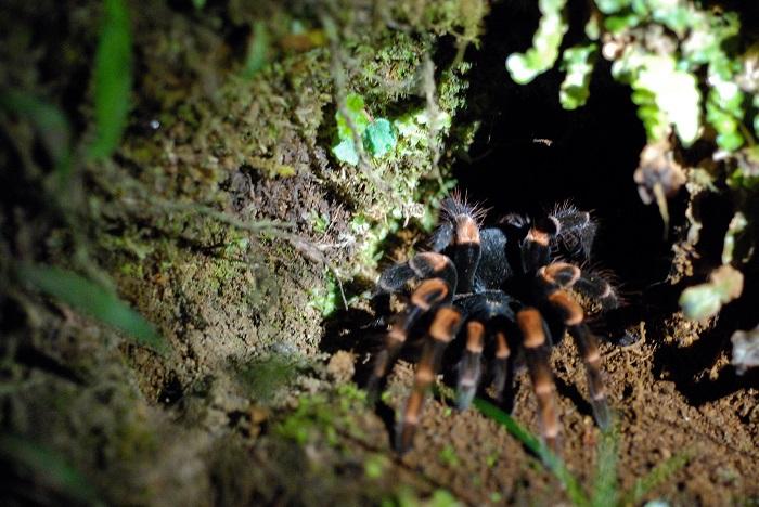 9 Monteverde