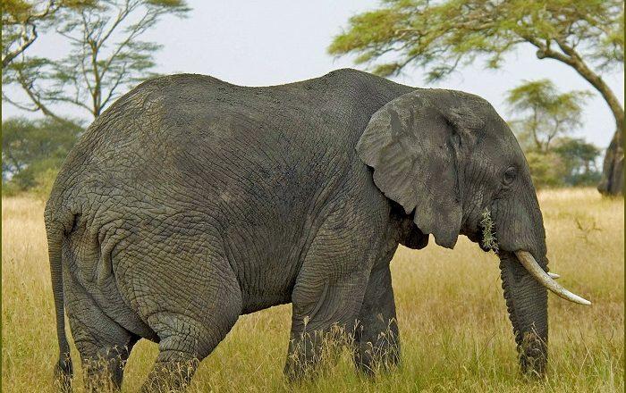 5 Maputo Reserve