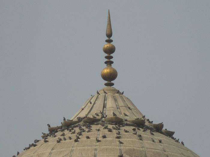 8 Jama Delhi