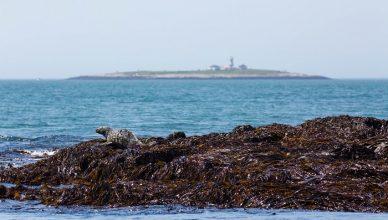 1 Machias Seal