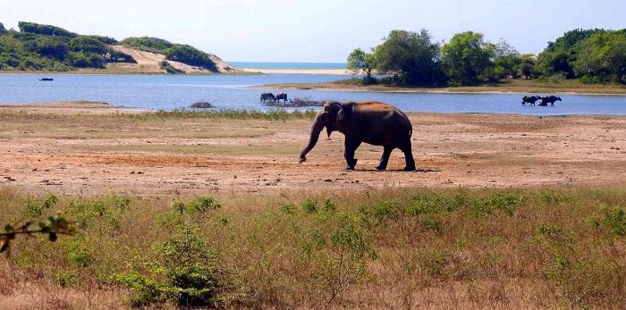 10 Yala Lanka