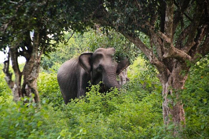 4 Yala Lanka
