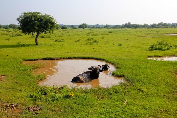 6 Yala Lanka