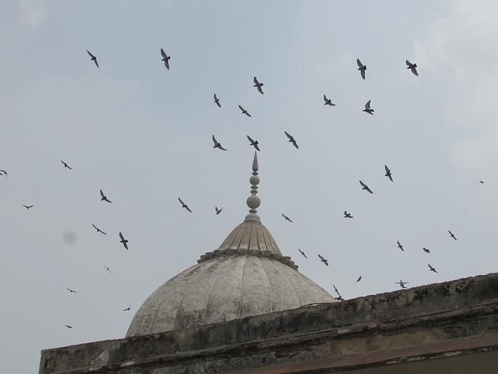 14 Red Delhi