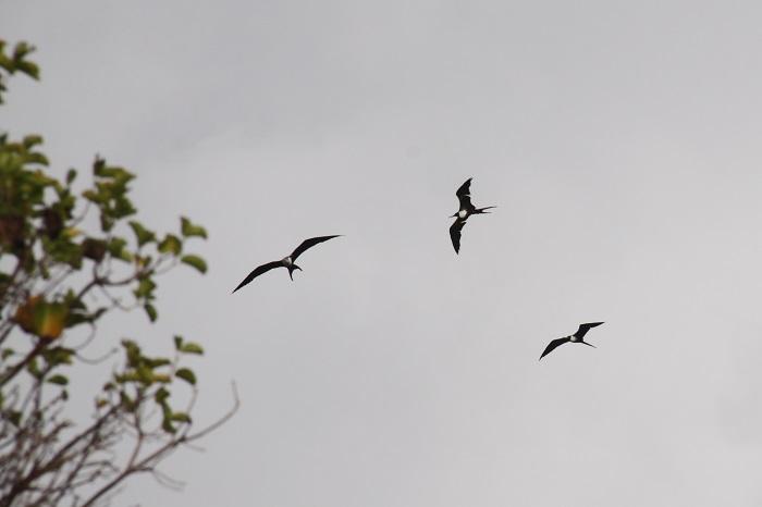 2 Bird Island