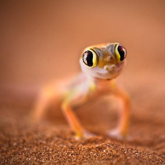 7 Namib Desert