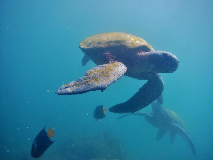 13 Galapagos