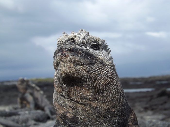 14 Galapagos