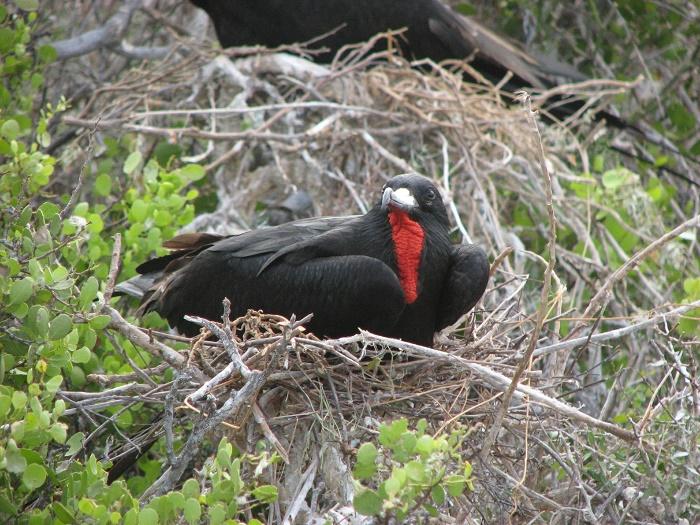 7 Frigate Barbuda