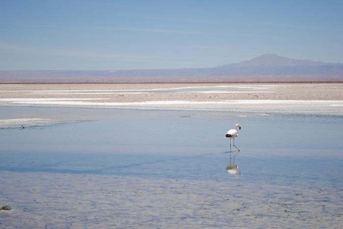 2 Salar Atacama