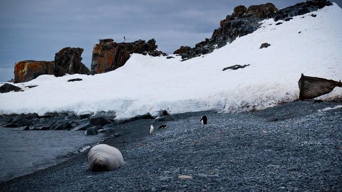 12 Deception Antarctica