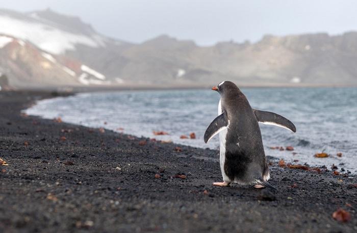 14 Deception Antarctica