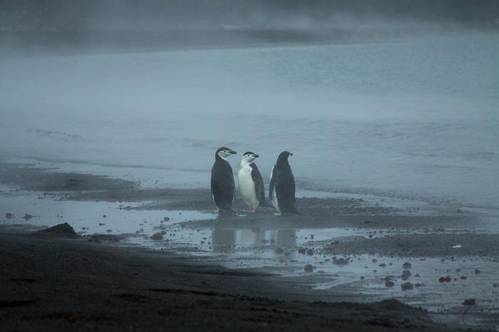 7 Deception Antarctica