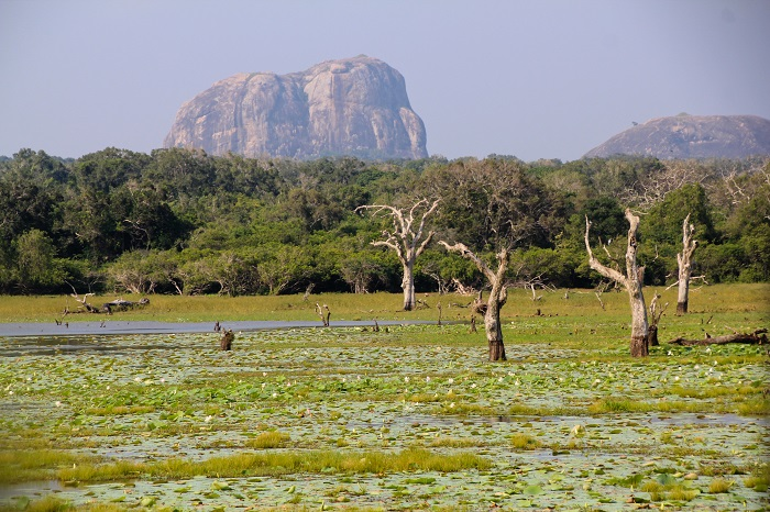 1 Yala Lanka