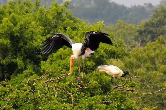 8 Yala Lanka