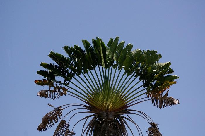 9 Devon Jamaica