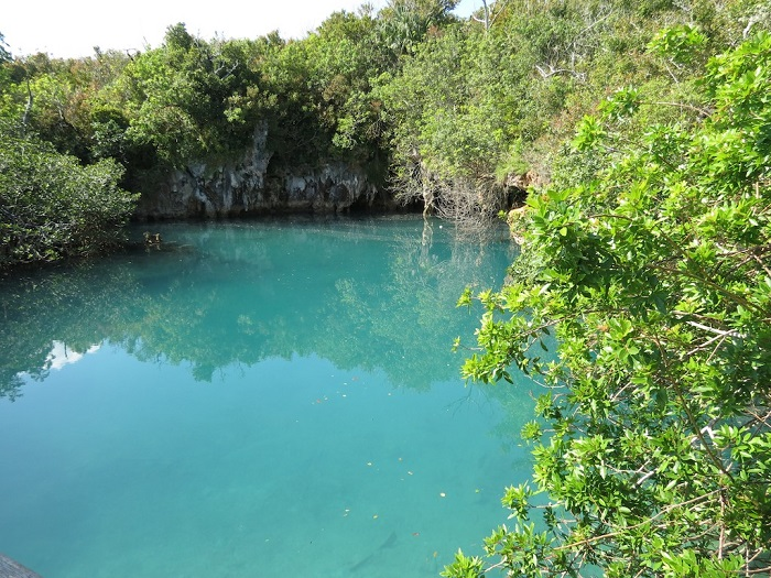 5 Blue Bermuda